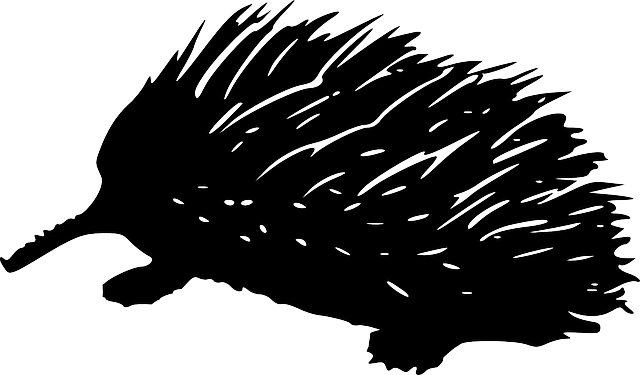 free vector graphic porcupine wildlife quill prickly