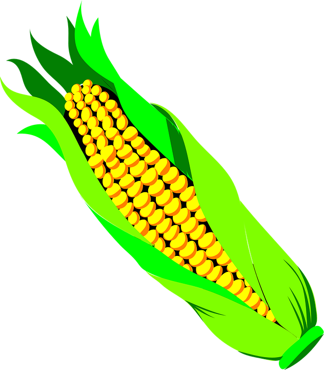 corn spike agriculture free vector graphic on pixabay rh pixabay com