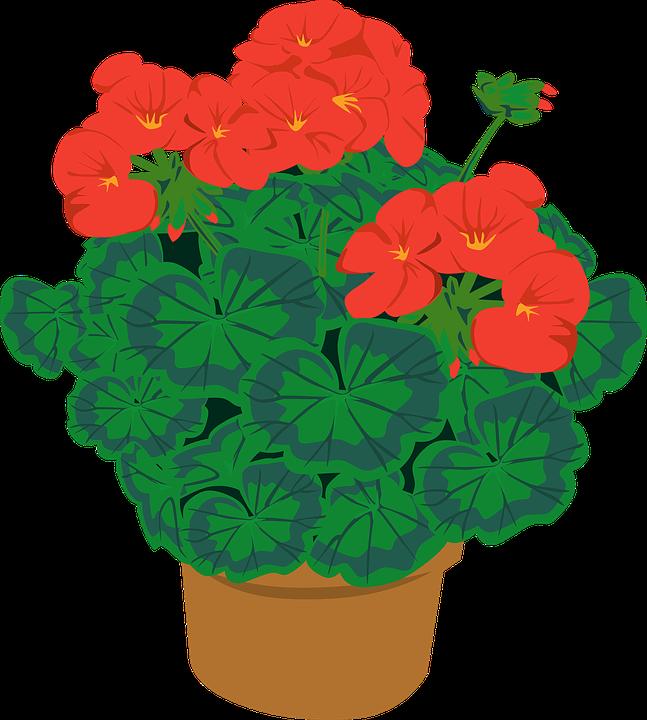 Geranio maceta floreciente gr ficos vectoriales gratis for Fotos de plantas en macetas
