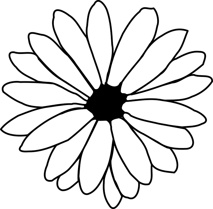 Daisy Outline Black And White Free Vector Graphic On Pixabay