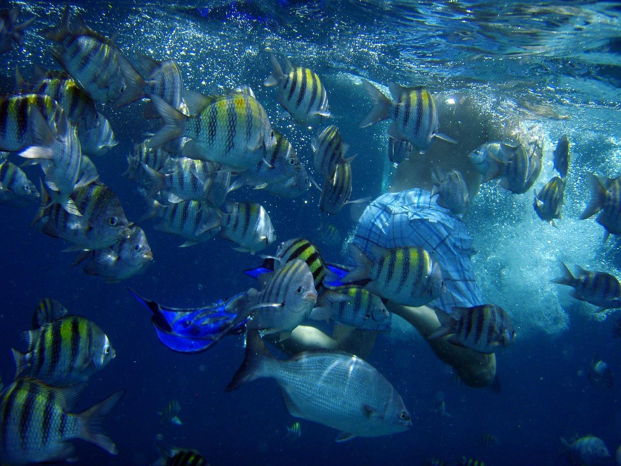 跳水,水下,鱼,海,游泳,男子,散热片,阿鲁巴,加勒比,小安