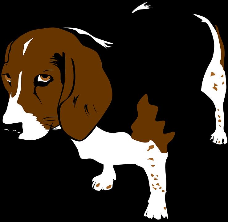 Immagine vettoriale gratis beagle cane animali