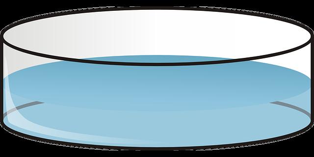 Petri Petrie Dish 183 Free Vector Graphic On Pixabay