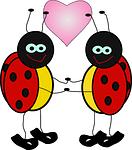 ladybugs, insect, lady