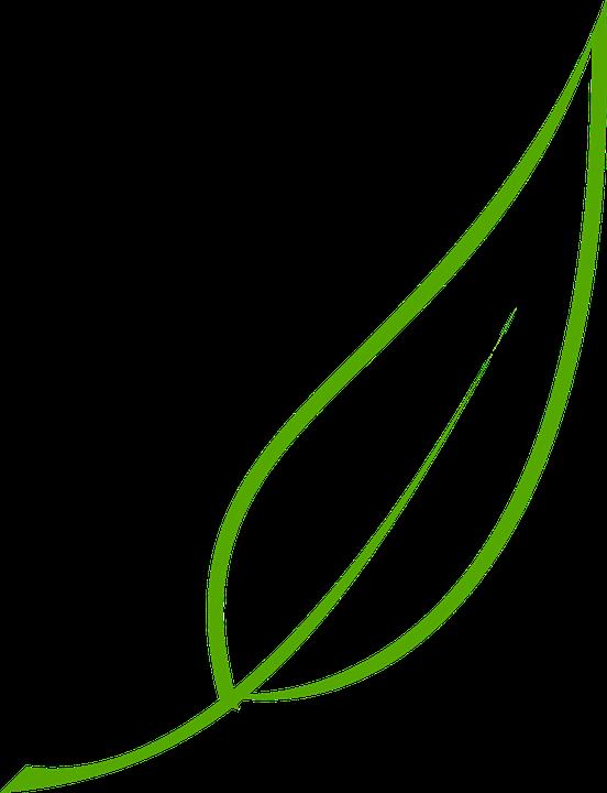 leaf green tea free vector graphic on pixabay rh pixabay com maple leaf vector art fall leaf vector art