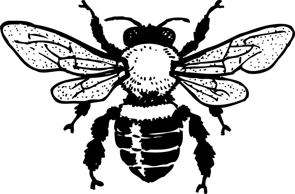 Honey Bee Insect Drawing Black And White Apis Bug