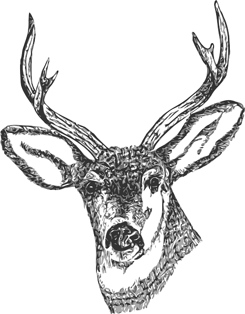 Line Drawings Of Animals Deer : Free vector graphic buck head stag deer drawing