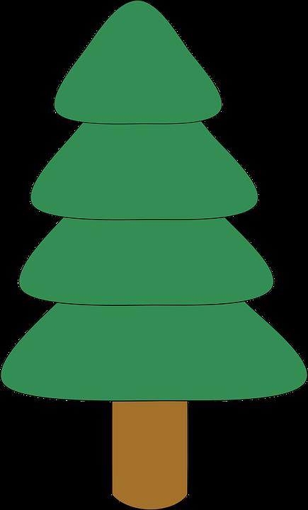 Tanne baum pflanze kostenlose vektorgrafik auf pixabay - Dessin sapin vert ...