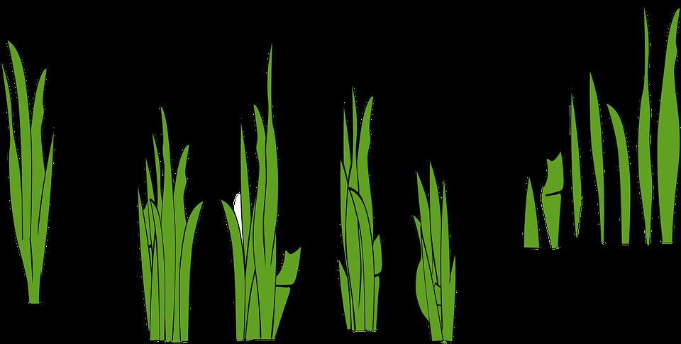 Rumput Sawah Blades Halaman Gambar Vektor Gratis Di Pixabay