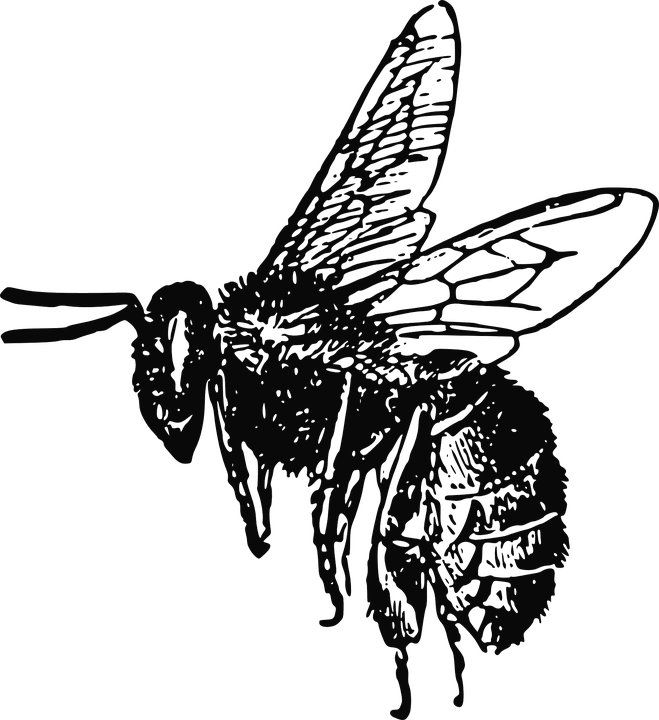 Bee Insect Drawing Flying Wings