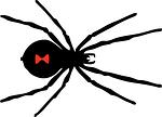 black, widow, spider