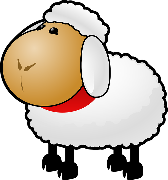 Sheep, White, Animal, Mammal, Mutton, Wool, Lamb