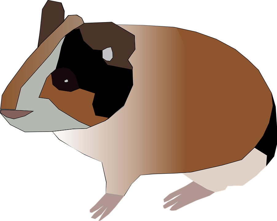 Free Vector Graphic Guinea Pig Hamster Pet Animal