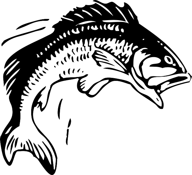 free vector graphic  fish  bass  lure  bait  angler  fin - free image on pixabay