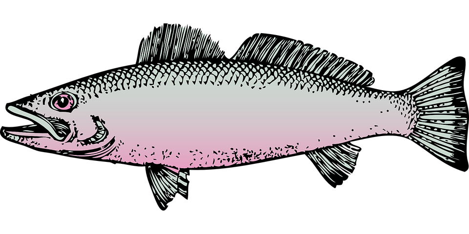 fish 30832 960 720