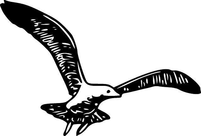 Free vector graphic: Gull, Herring, Bird, Wings, Spread ...