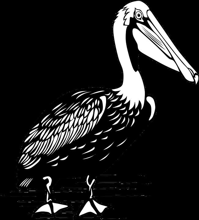 Balijští obyvatelé majně Rothschildově přezdívají jalak bali (bílý pták) a curik bali.
