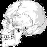 skull, cracked, head