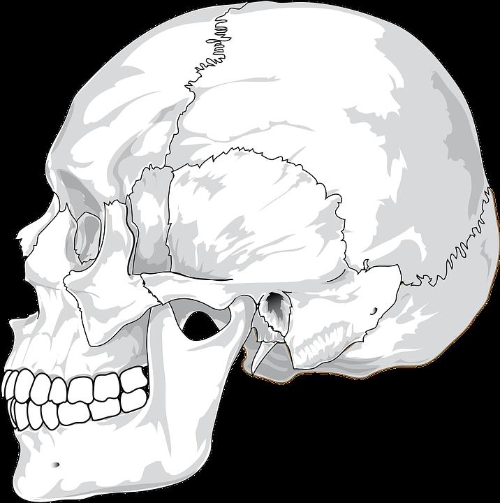 Schädel Geknackt Kopf · Kostenlose Vektorgrafik auf Pixabay