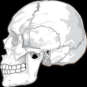 Skull, Cracked, Head, Skeleton, Side