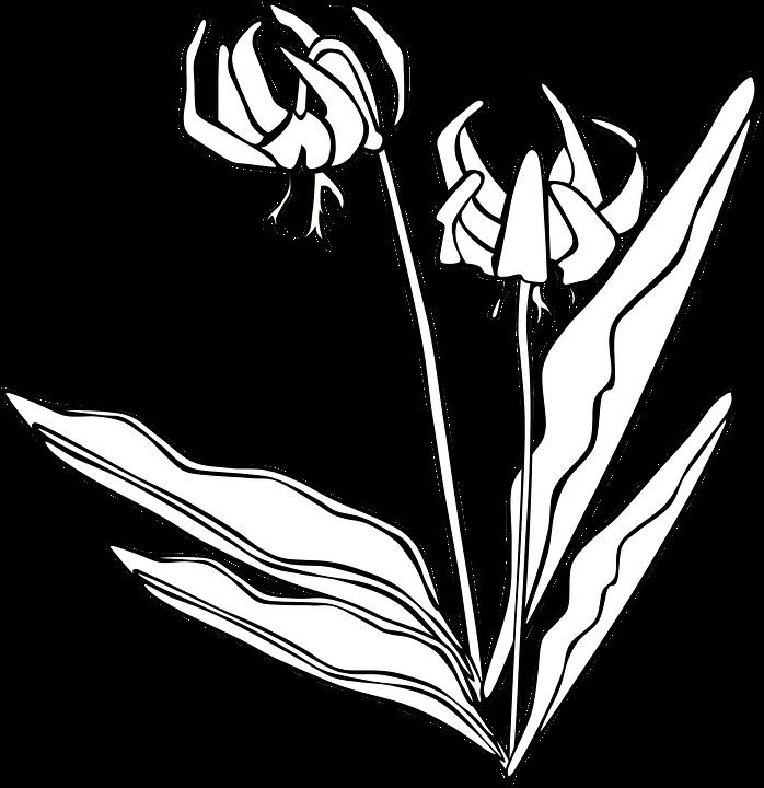 Planta Flores Blanco Y Negro Graficos Vectoriales Gratis En Pixabay