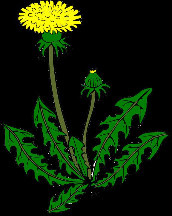 m lkeb tte blomst gul gratis vektor grafik p pixabay. Black Bedroom Furniture Sets. Home Design Ideas