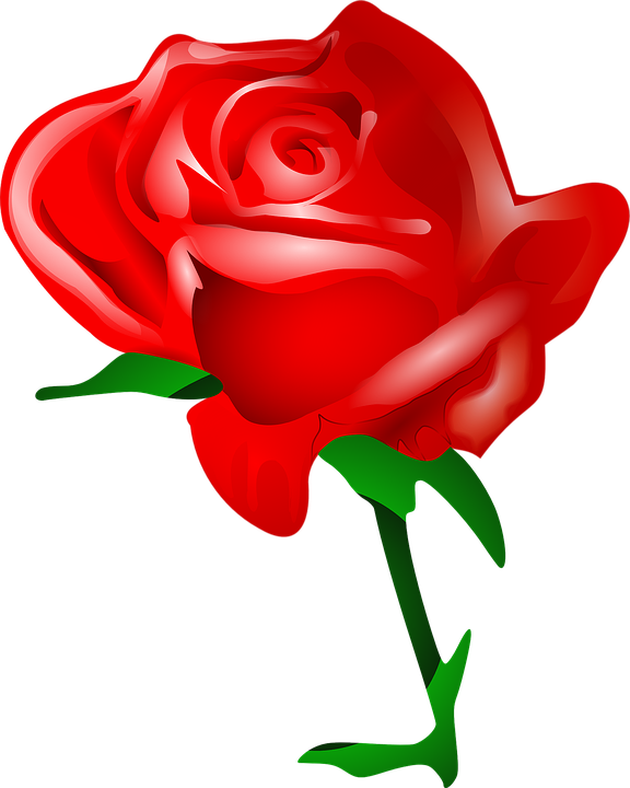 free vector graphic rose, flower, love, romantic  free image on, Beautiful flower
