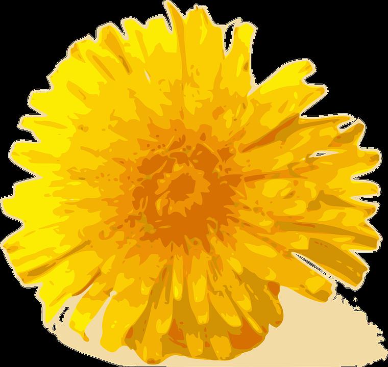 Flower Dandelion Yellow Flora Weed 31430 on Tumblr Transparent Flowers Rose