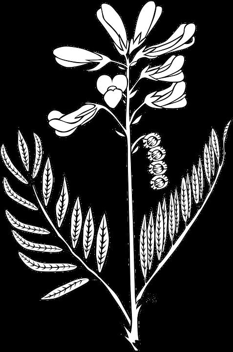 Bunga Bud Tanaman Gambar Vektor Gratis Di Pixabay