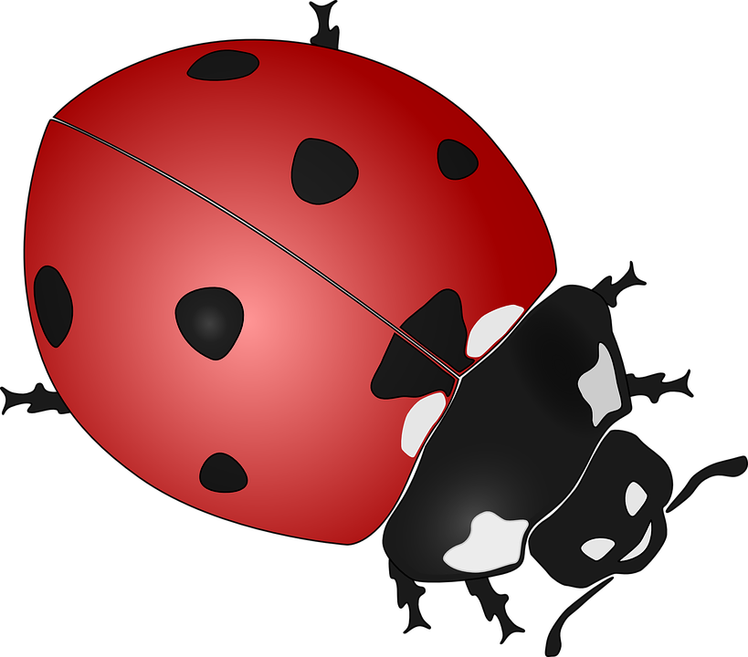 Ladybug - Free images on Pixabay