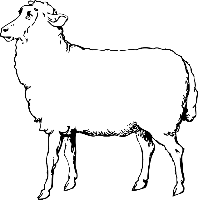 Sheep Animal Black And White · Free vector graphic on Pixabay Mammals Clipart Black And White