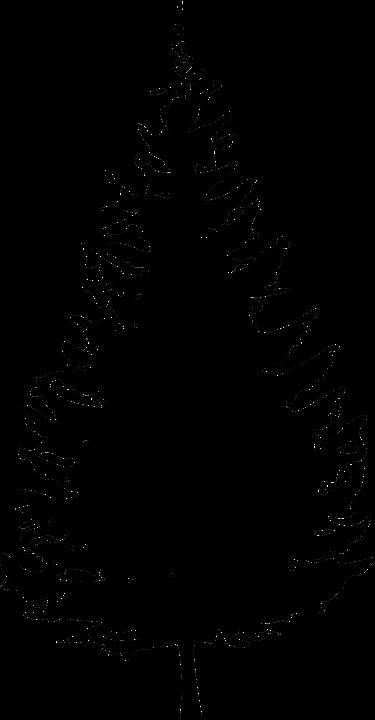 Silhouette Christmas Tree Pine Free Vector Graphic On Pixabay