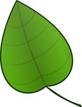 leaf, green, plants