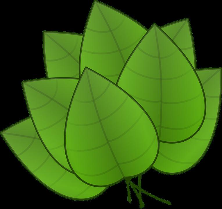 Hojas Verde Plantas Graficos Vectoriales Gratis En Pixabay - Hojas-de-arboles
