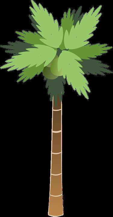 Palmeira Arvore Altura Grafico Vetorial Gratis No Pixabay