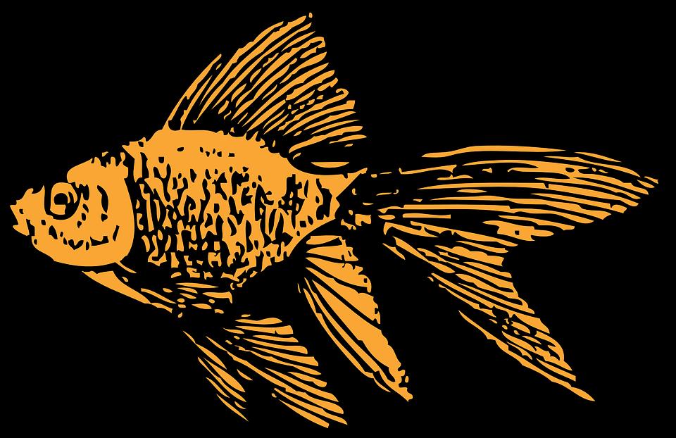 Goldfish Aquarium Tank Free Vector Graphic On Pixabay