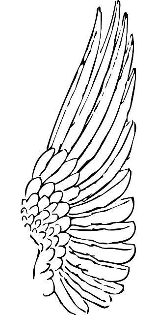 Line Drawing Wings : Wing bird angel · free vector graphic on pixabay
