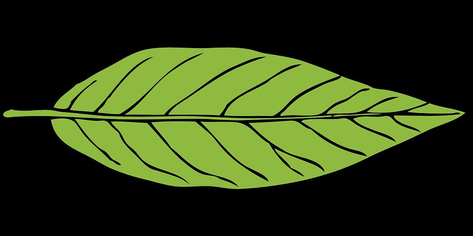 De la hoja verde planta gr ficos vectoriales gratis en - Plantas de hojas verdes ...