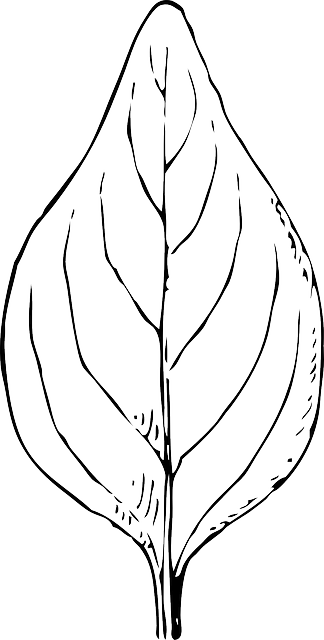 Leaf Black And White Plant Free Vector Graphic On Pixabay