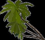 palm trees, slanted, tropical