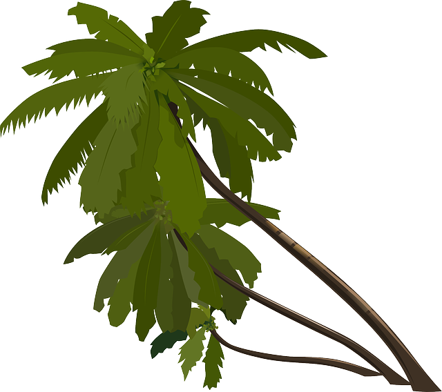 palm trees slanted tropical  vector graphic  pixabay
