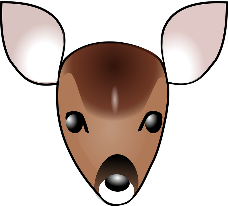 deer fawn face free vector graphic on pixabay