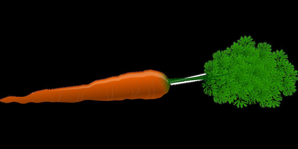 Vegetable - Free images on Pixabay