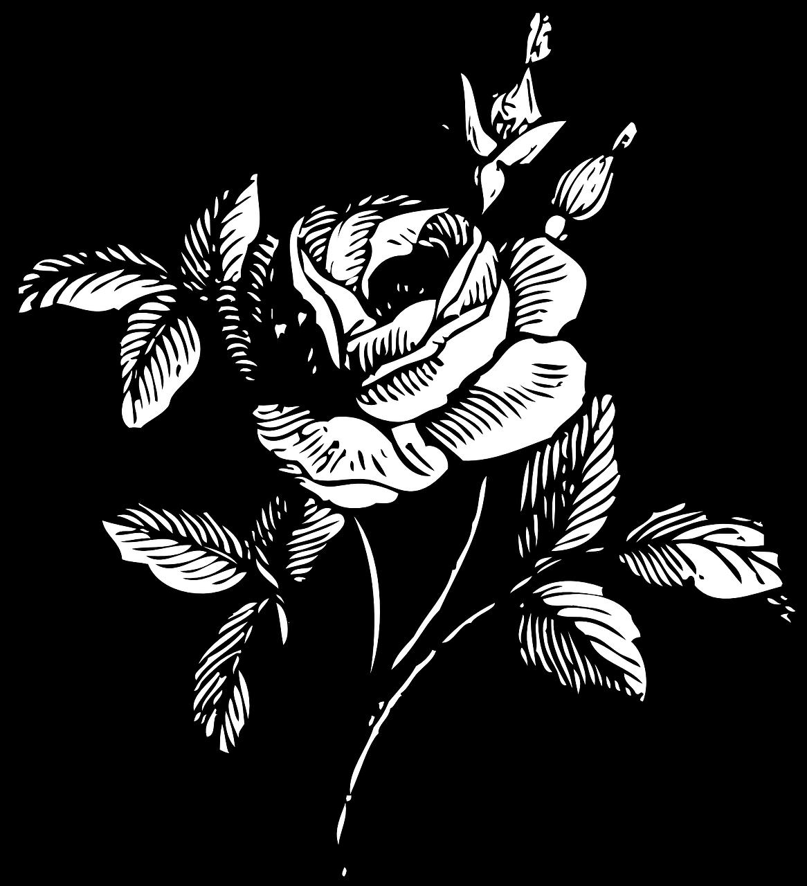 Rose Hitam Dan Putih Bunga Gambar Vektor Gratis Di Pixabay
