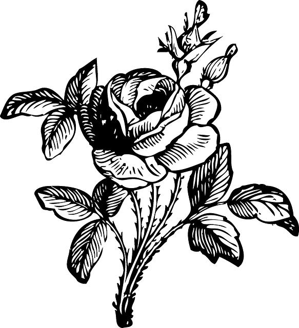 Картинки черно белых цветов, ураза
