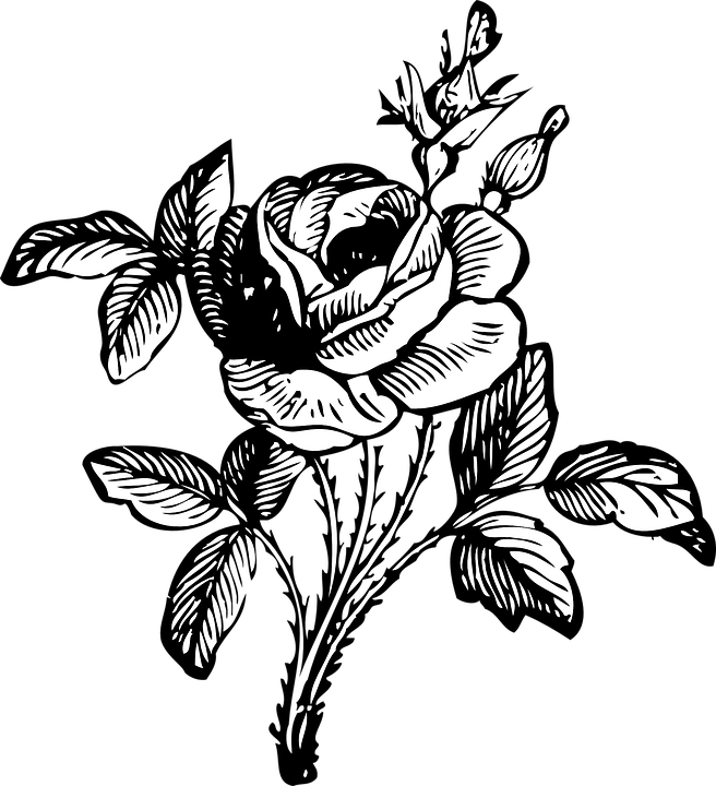 Rose Black And White Floral Free Vector Graphic On Pixabay