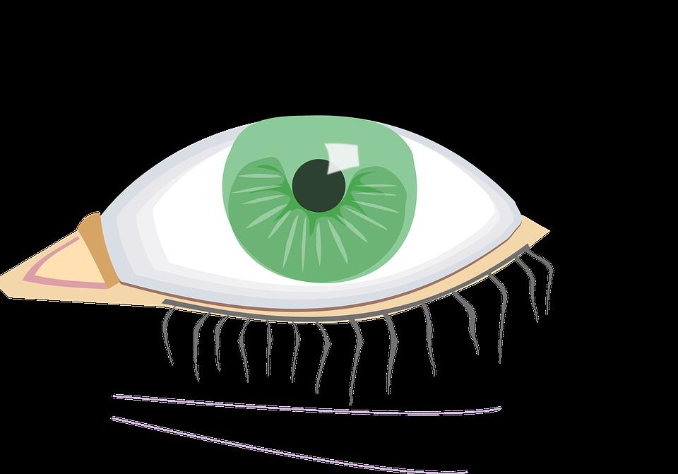 Eye, Green, Organ, Human Body, Eye Lashes, Black, Young