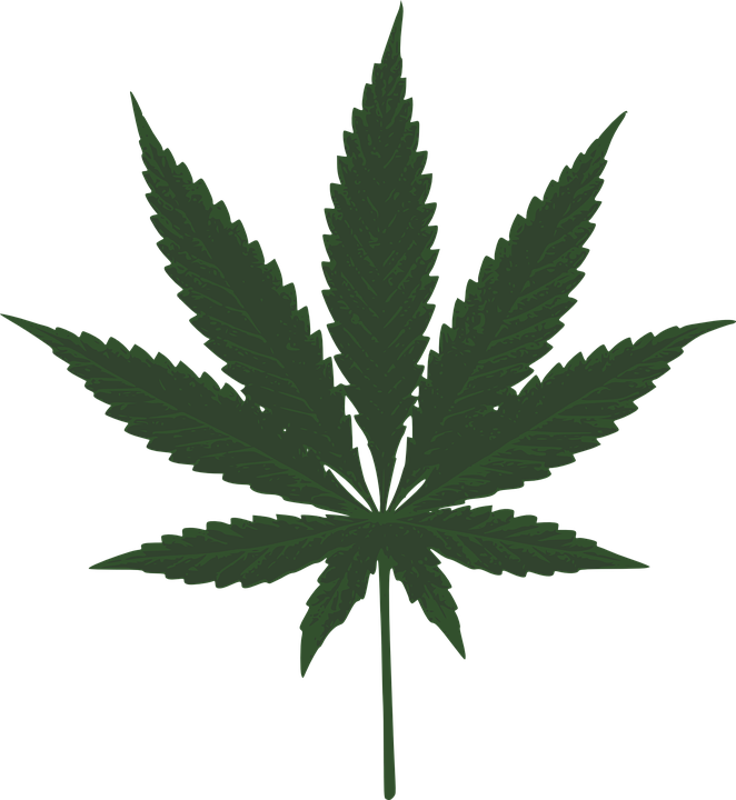 marijuana leaf green free vector graphic on pixabay rh pixabay com marijuana leaf vector free download marijuana leaf vector image