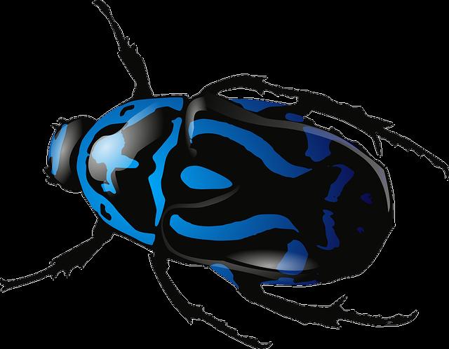 Cetoniidae Stock Images - Download 149 Royalty Free Photos