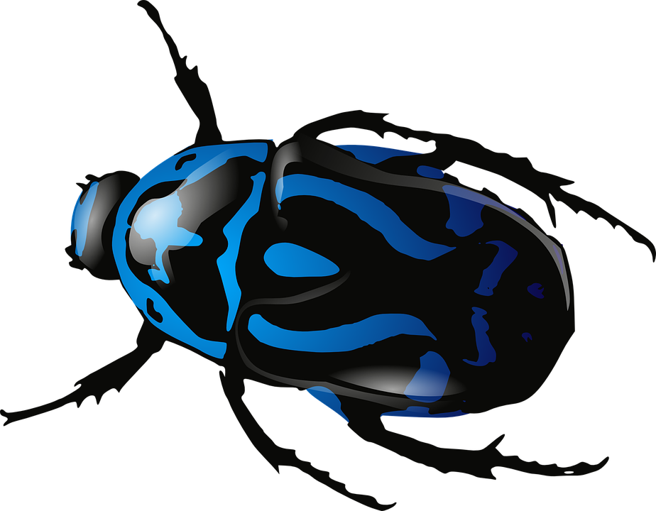 beetle insect bug free vector graphic on pixabay